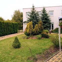 ogród pełen choinek