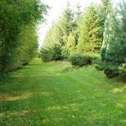 trawnik