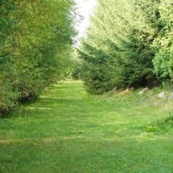 piękny, zielony ogród