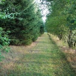 ścieżka wtrawie 2