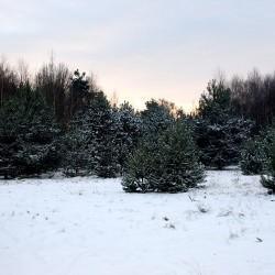 śnieg zasypał otoczenie domu opieki wJadwininie
