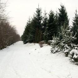 ścieżka zasypana śniegiem